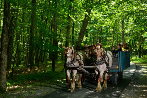 Take a horse and buggy ride to explore the area surrounding Woodloch Resort