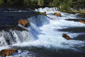 Bears at Alagnak Lodge.