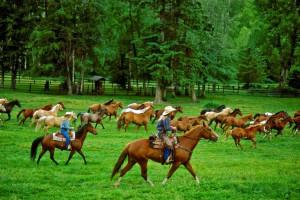 Horses at Averill's Flathead Lake Lodge.