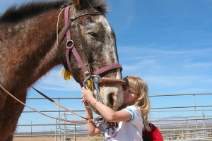 Horses at Stagecoach Trails Guest Ranch.