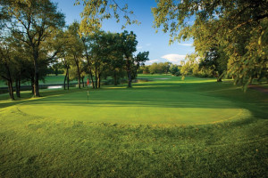 Golf greens at Coachman's Golf Resort.