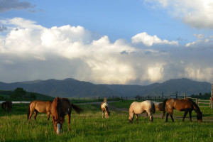 Horses at Granite Creek Guest Ranch.