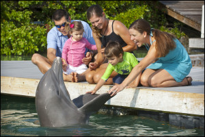 Dolphin encounters at Hawks Cay Resort.