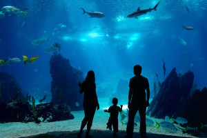 Aquarium near Pier House Resort & Spa.