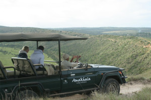 Safaris at Amakhala Game Reserve.