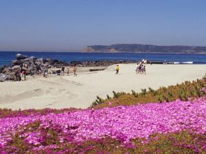 The beach at Glorietta Bay Inn.
