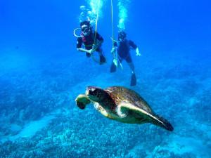 Diving at Hawks Cay Resort.