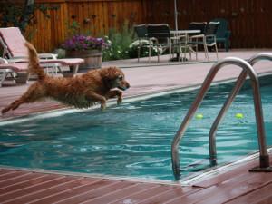 Swimming at Alpenhof Lodge.