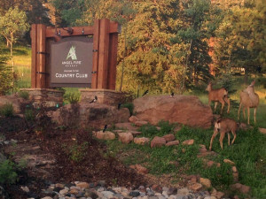Deer at Resort Properties of Angel Fire.