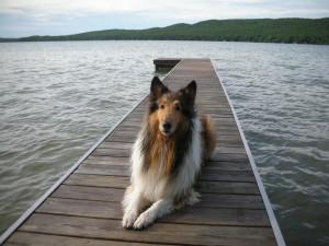 Pets welcome at Visit Up North Vacation Rentals.
