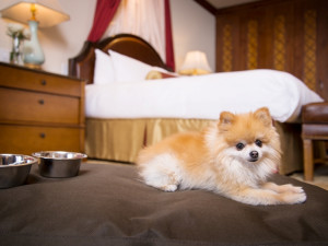 Pets welcome at Arrabelle at Vail Square.