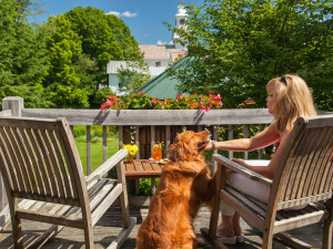 Pets welcome at The Inn at Weston.