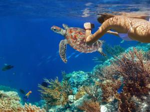 Snorkeling at Barefeet Rentals.