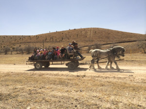 Horse wagon rides at Cibolo Creek Ranch.