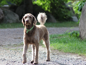 Pets welcome at Timber Trail Lodge & Resort.