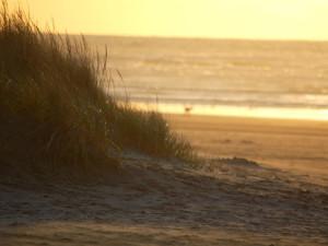 The beach at Beachhouse Vacation Rentals.