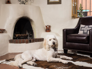 Pets welcome at Two Casitas, Santa Fe Vacation Rentals.