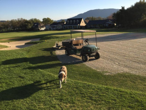 Pets welcome at Greenhorn Creek Resort.