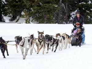 Dog Sledding at Mount Bachelor Village Resort.