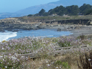 The beach at Sea Otter Inn.