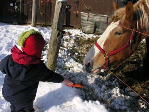 Feeding the horses at Stowehof Inn & Resort.