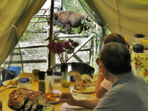 Dining at Bisonquest Wildlife Vacations.
