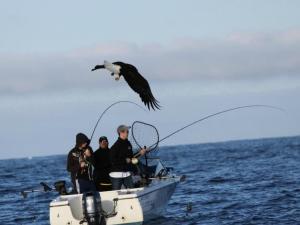 Fishing at Shearwater Resort & Marina.