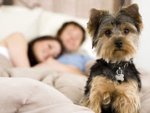 Pet friendly accommodations at Chateau Resort and Conference Center.
