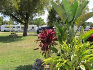 RV campsite at Miami Everglades.
