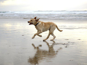 Pet friendly beach at Inn at Cape Kiwanda.