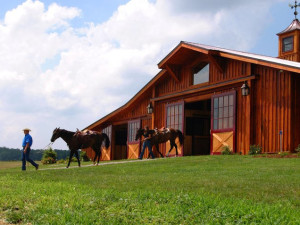 Horses near Highland Rim Retreats.