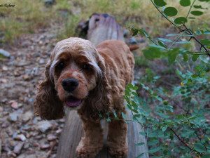 Pets welcome at SkyRun Vacation Rentals - Summit County, Colorado.