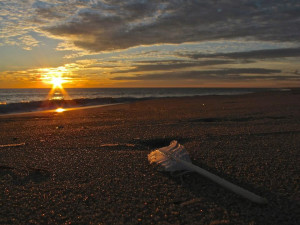 Sunrise at Sandbridge Realty.