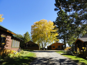 Cabins at Marten River Lodge.
