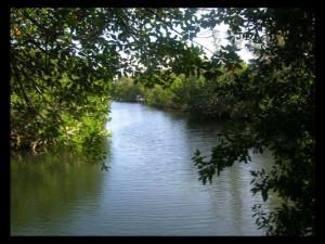 Canal view at Ed & Ellens Big Pine Key.