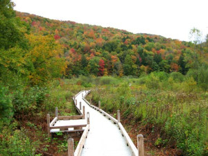 Boardwalk at Birch Ridge Inn.