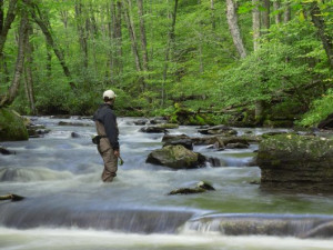Fishing near Snowshoe Properties Management.
