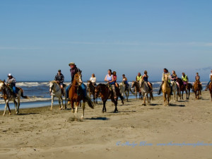 Horseback riding on the beach near Grays Harbor Inn & Suites.