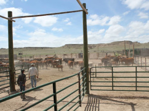 Ranch pens at Colorado Cattle Company Ranch.