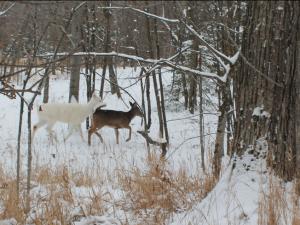 Deer hunting at McQuoid's Inn & Event Center.
