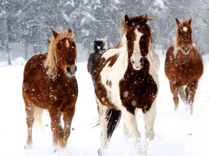 Horses running in the snow at Vista Verde Ranch.