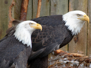 National Eagle Center near Eagles on the River Vacation Rentals.