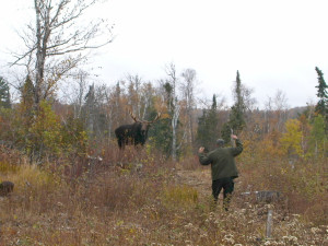 Moose watching at Gunflint Lodge.