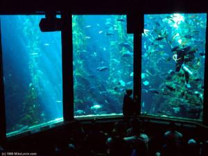 Aquarium Near Lone Oak Lodge