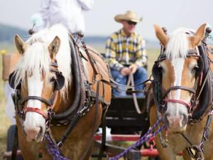 Wagon ride at Gaynor Ranch & Resort.
