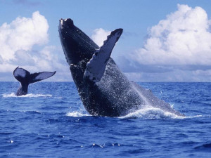Whale Watching at Grand Regina Los Cabos