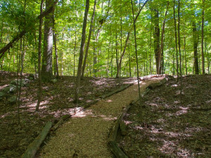 Forest path at Moondance Ridge Bed & Breakfast.
