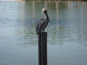Pelican at Sunshine Resort Rentals, LLC.