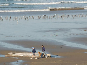Pet friendly beaches at Manzanita Rental Company.