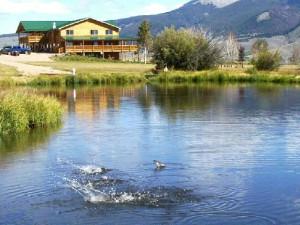 Fish jumping at Montana High Country Lodge.